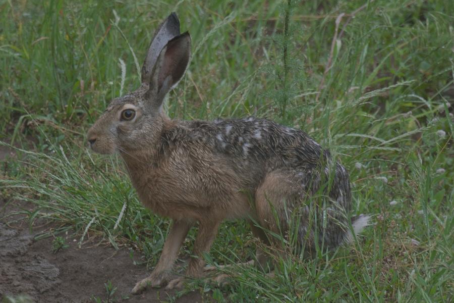 лов на заек